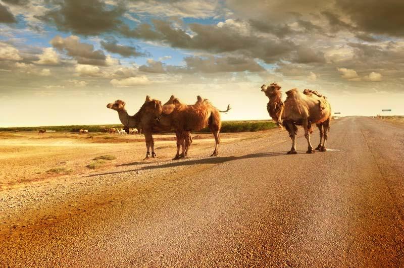 Kyzyl-Kum Desert Central Asia Rally